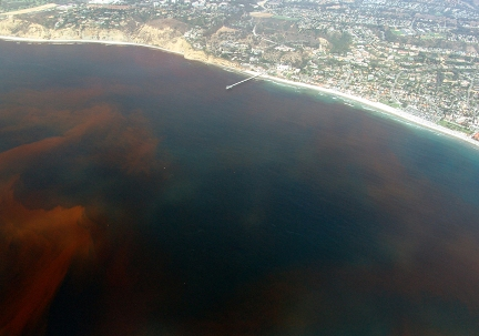 A Red Tide:- Dangerous Algae Bloom (Video Included) (4/4)