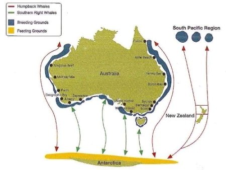 Map Of Australia Video.Whale Watching Season Australia Pictures Video Magsx2 S Blog